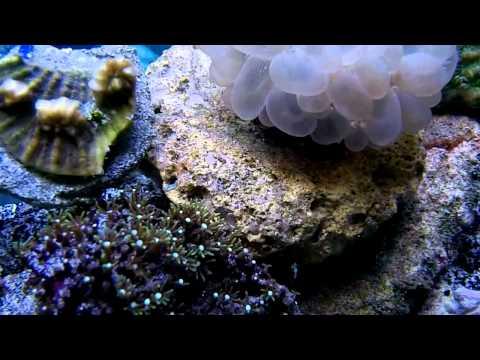 More Underwater Footage @ Elegant Reef