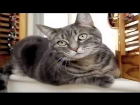 Smart animal videos
