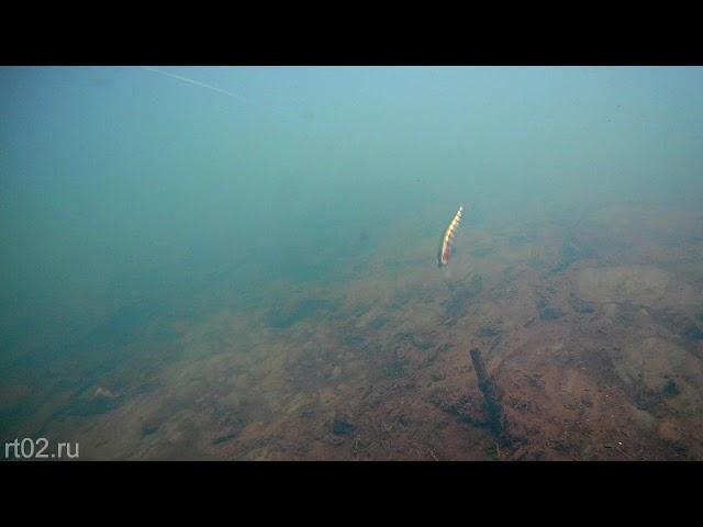 Копия воблера Zipbaits Rigge 90 sp от Bearking (подводная съемка)