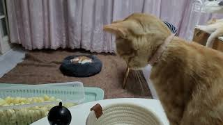 [고양이] 그리고 마늘까기 #10