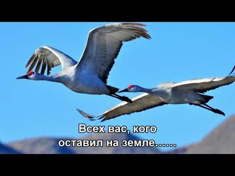 Журавли - Ян Френкель (1973) HD 1080 (Subtitles)