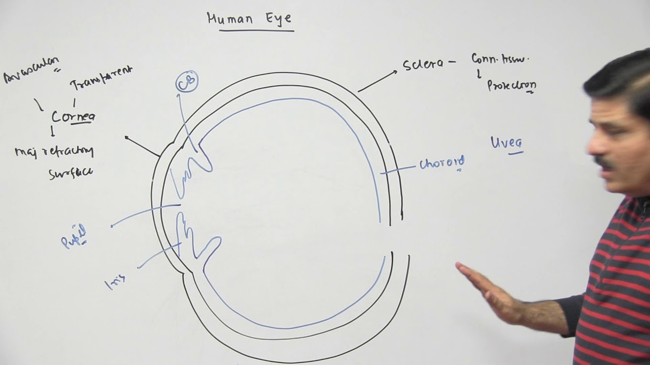Basic Anatomy of Human Eye | Neural Control & Coordination - NEET ...