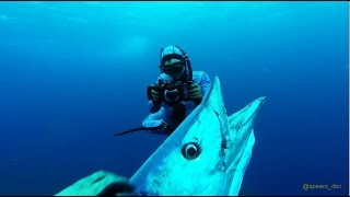 Best of North Carolina Spearfishing - Wahoo & mix