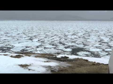 Moving ice on Bonne bay