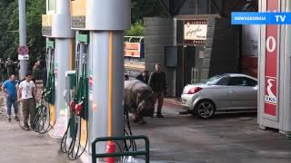Поимка бегемота, сбежавшего из тбилисского зоопарка