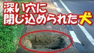 深い穴に閉じ込められた犬!1ヶ月後に保護された時にはほぼ手遅れの状態だった…【驚愕】
