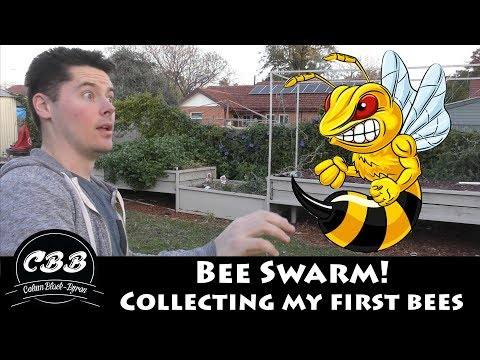 Collecting My First Bee Swarm - My First Bees!