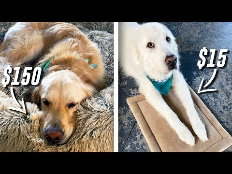 TESTING DOG BEDS! WHAT DO THEY LIKE BETTER? ($15 vs $150+)