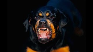 Самые сильные 10 пород собак в мире