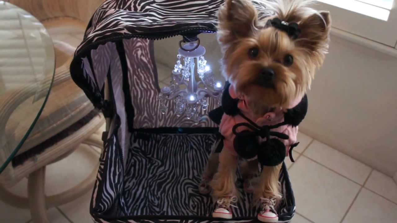 What S That Chandelier Doing In Ur Dog Stroller Youtube