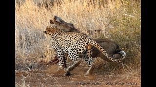 ¡Increíble! Elefante tan rápido y enojado, ven a salvar a Baby Monkey Leopardo escapado