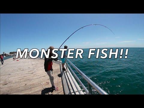 Monster Flathead & Multi Species Fishing, Mornington Pier EP003