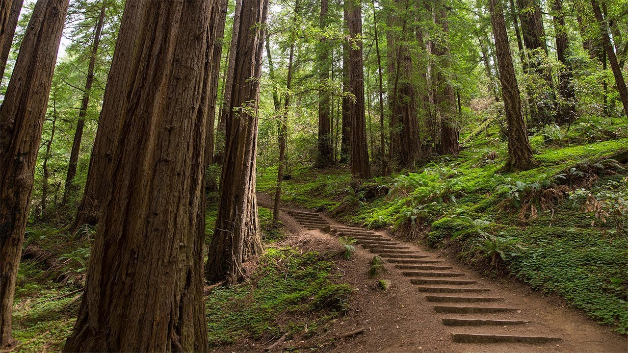 Muir Woods Giant Redwoods And Sausalito Half Day Trip Youtube