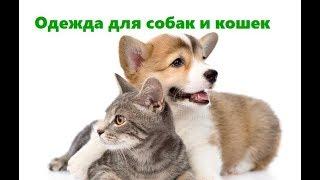 Одежда Для Животных & Зачем Животным Нужна Одежда. Ветклиника Био-Вет