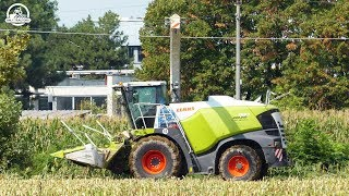 NEW CLAAS JAGUAR 980 + ORBIS 900 12  Rows | Mais Silage | ASSANELLI | ᴴᴰ