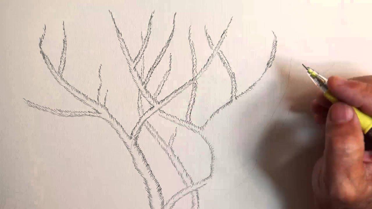 Disegno a matita rami di faggio youtube for Foto di alberi da colorare