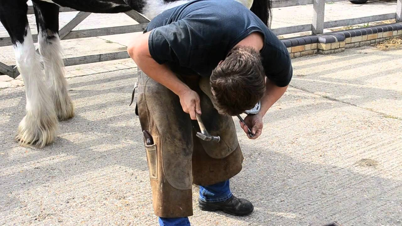 How to shoe a Shire Horse - YouTube
