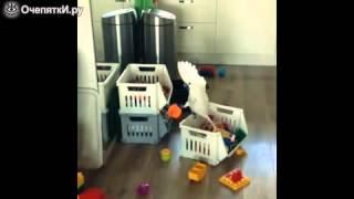 Смешная озвучка ролика с попугаем смотреть видео прикол