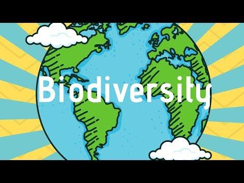 Biodiversity and ecosystems