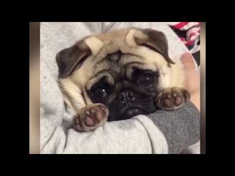 The Funniest and Cutest Pet Video (Super Cute Animals)