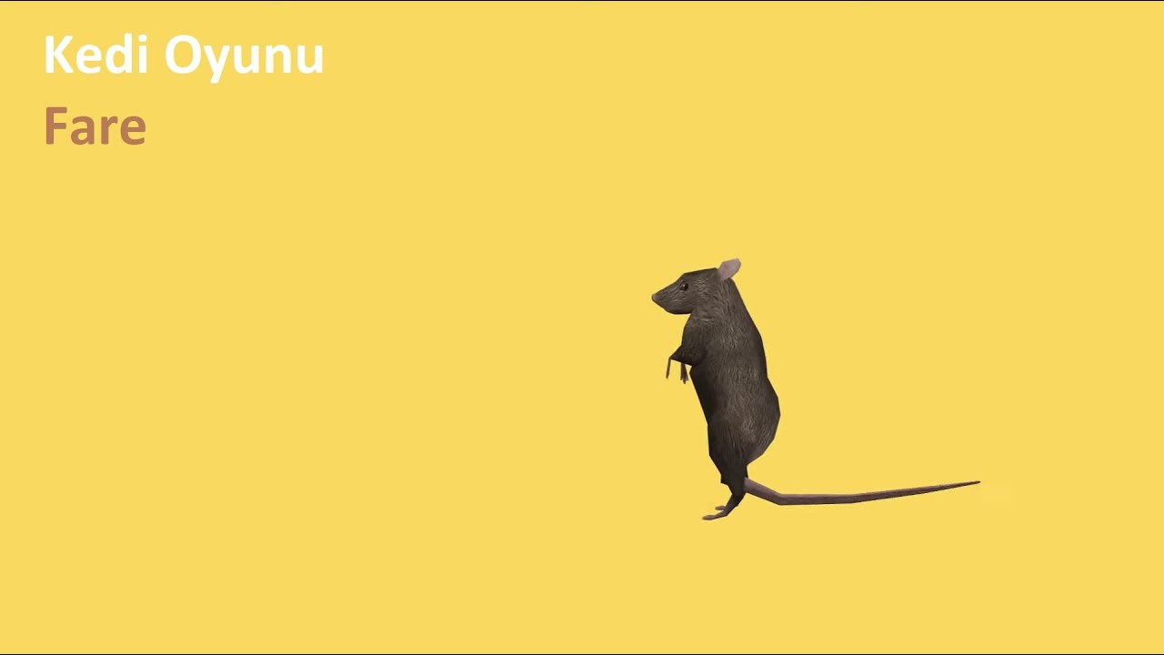Download Kedi Oyunu - Fare Yakalama | Cat Games - Catching Mice Entertainment Video for Cats to Watch.