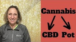 Where Does Cannabidiol or CBD Come From? It doesn't make you high!