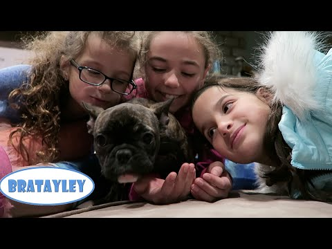 Naming the New Puppy! (WK 263.6)  | Bratayley