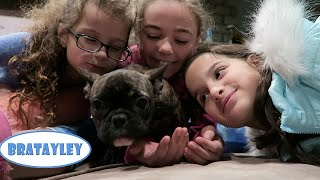 Naming the New Puppy! (WK 263.6)    Bratayley(What did we end up FINALLY naming the new puppy? Order your official Bratayley backpack and lunchbox now! http://bit.ly/Bratmerch Bratayley