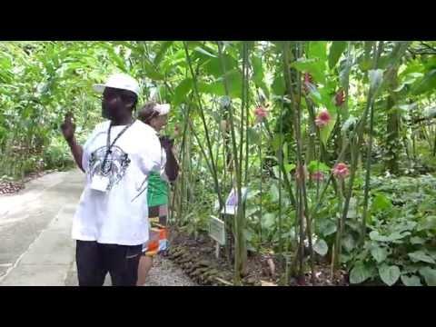 Crazy Botanical Tour Guide! (St. Lucia)