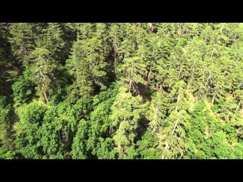 SOĞUKSU: a forest in steppe