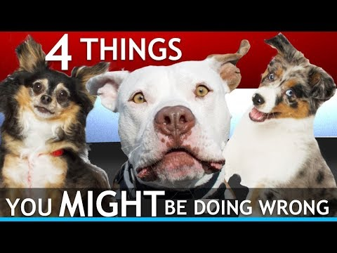 4 Things You Might Be Doing Wrong With Your Dog In Public