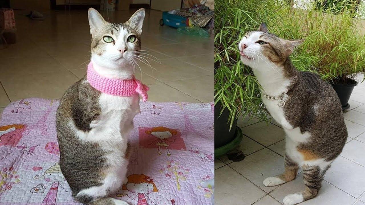 Кот и ток видео