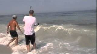 Huge Stingray Caught Surf Fishing In Assateague Island