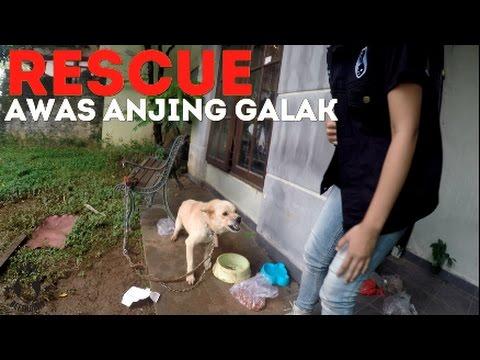 RESCUE: Begini Menjinakkan Anjing Galak