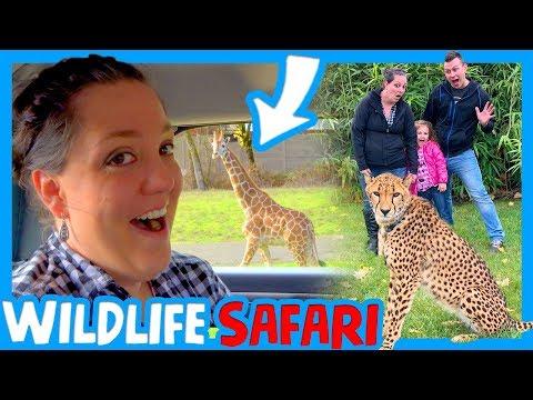 🦏🦊 PICTURE WITH A CHEETAH 🐯🐘 WIldlife Safari Animal Adventure 🦁🐒 RV Oregon with Kids