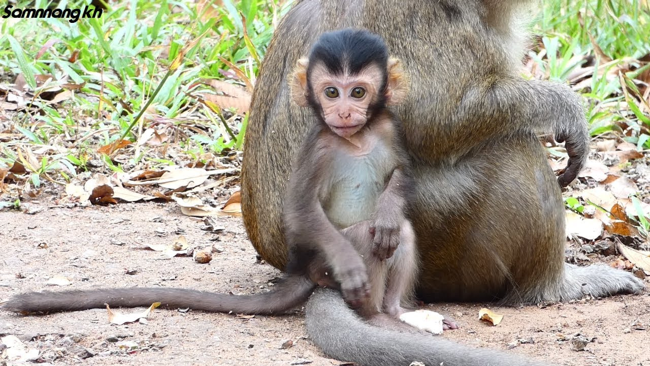 Rey is a smart and intelligent baby monkey - Samnnang kh ...