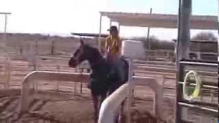 11yr old sorrel heel horse for sale