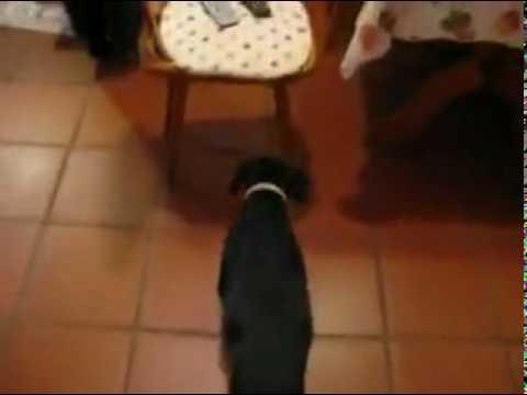 il-cane-comunista