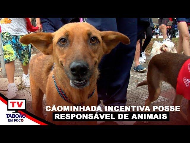 Repórter Mirim acompanha 3ª edição da Cãominhada em Taboão da Serra