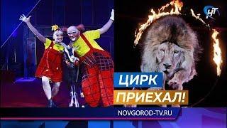 В выходные у театра драмы развернулся цирк-шапито