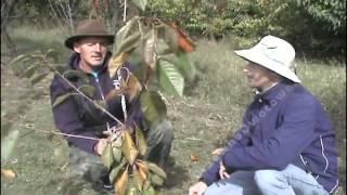 Termin sadzenia drzewek owocowych - film ze strony www.DrzewkoOwocowe.pl