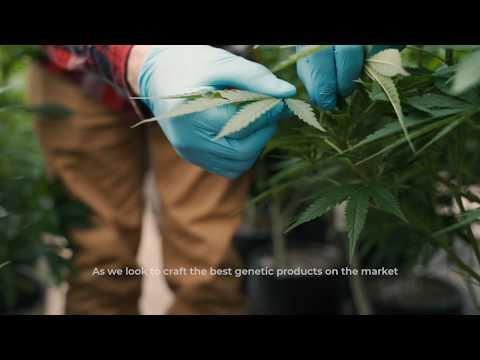 Hemp Genetic Testing: Blue Forest Farms