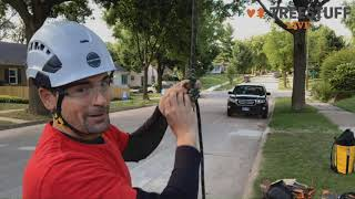 Tree Climbing Techniques Webinar with Taylor Hamel