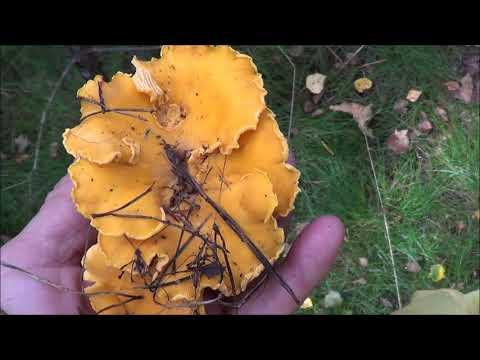 Ай-да в лес по грибы!
