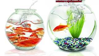 видео Как сделать бизнес на аквариумных рыбках?