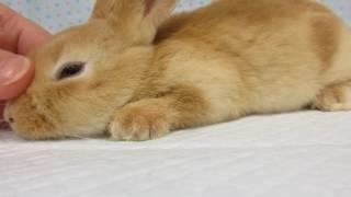 ペットの専門店コジマ thumbnail