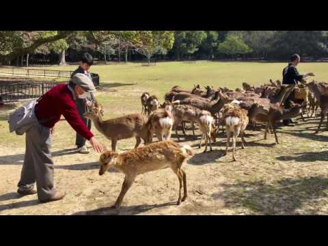 Nature Healing from Nara