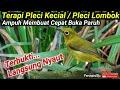 Terapi Pleci Kecial Kuning Lombok  Mp3 - Mp4 Download