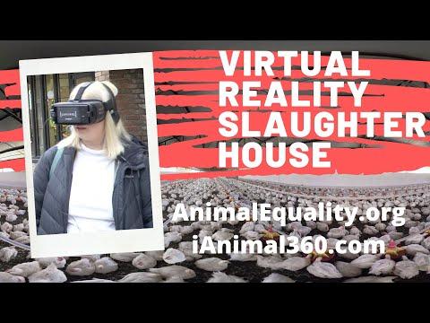 VR Slaughter Footage!  Will She Go Vegan?!