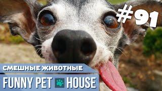 СМЕШНЫЕ ЖИВОТНЫЕ И ПИТОМЦЫ #91 АВГУСТ 2019 | Funny Pet House